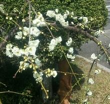 信楽にも春が来た。